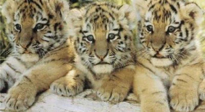 The Nine Stocks Tiger Cubs Love