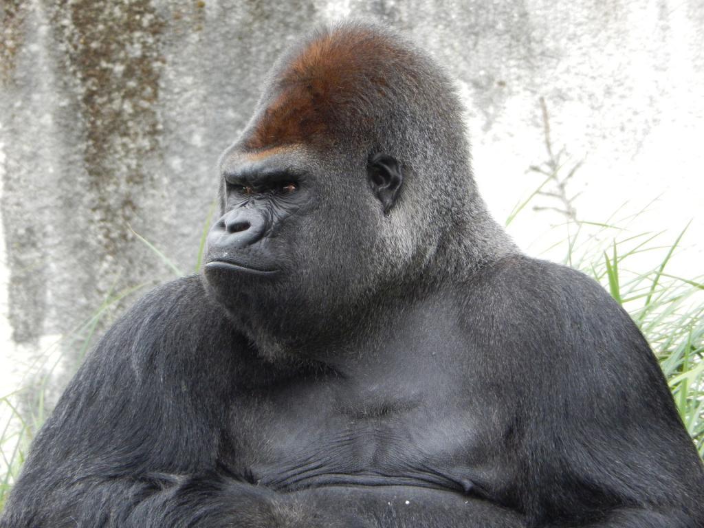 Binary options gorilla