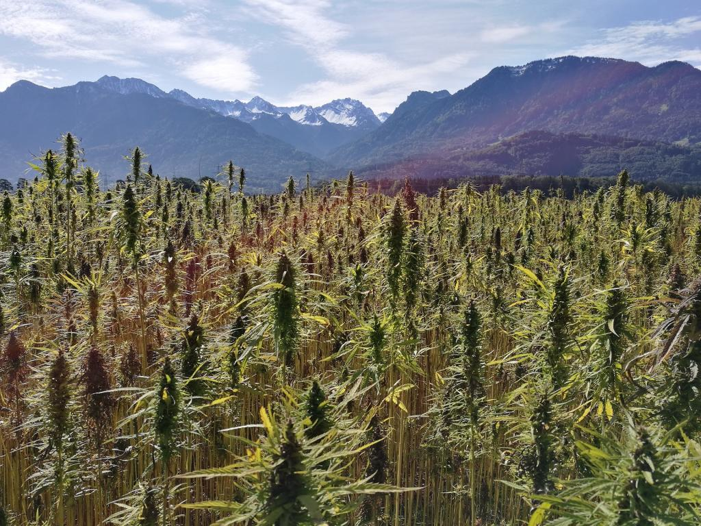 From hemp to organic foods, farm bill embraces change in rural US