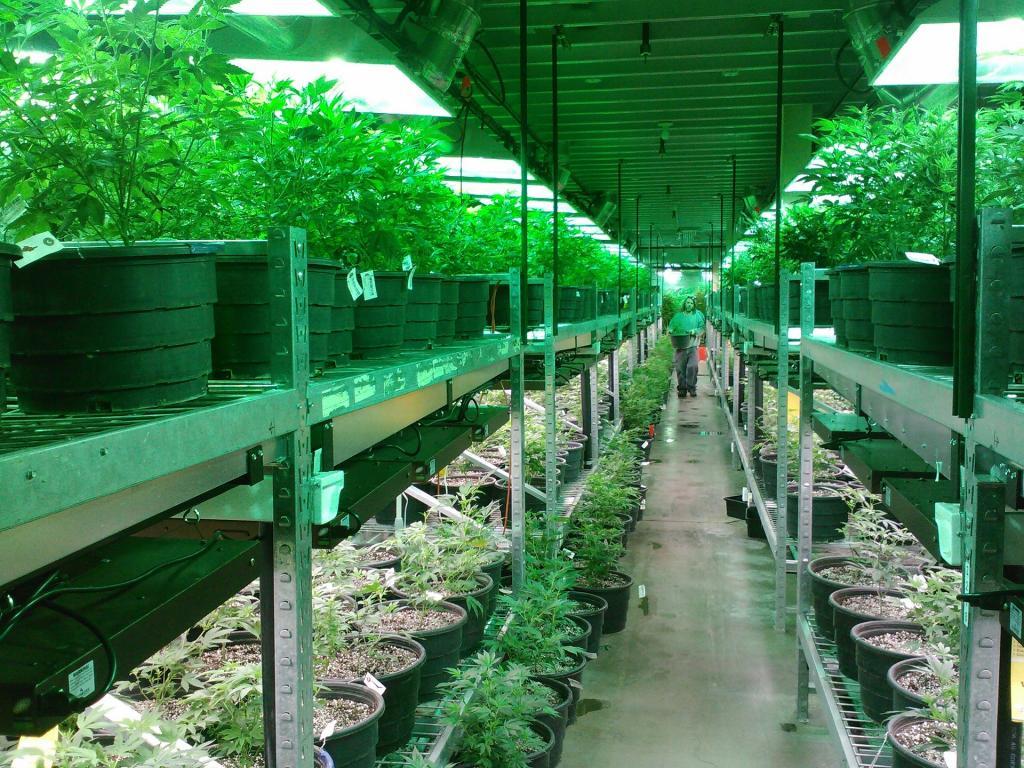 Aurora Cannabis (TSE:ACB) Lowered to Sell at Stifel Nicolaus