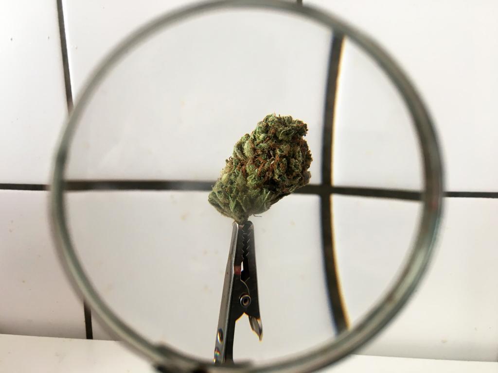 3 Small Cannabis Companies To Keep An Eye On