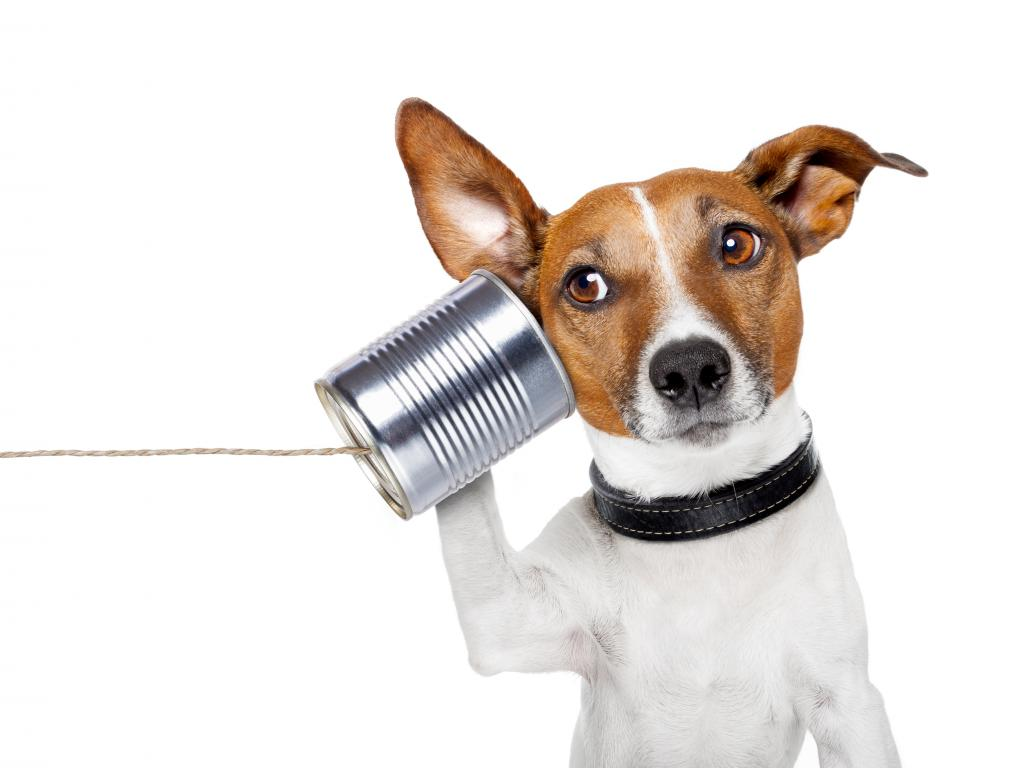 follow up call after interview now what how to follow up after an initial phone interview here s how to nail it spdr s p 500 etf etf