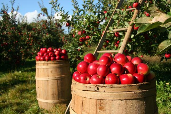 Borderlands: Mexico's Demand For US Apples Rises; Pharr International Bridge Is Number 3 Land Trade Hub In Texas