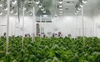 Photo courtesy of Aurora Cannabis.