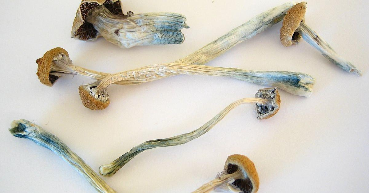 Denver Votes To Decriminalize 'Magic Mushrooms'