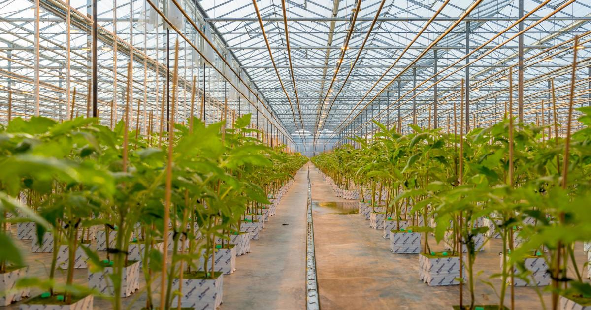 AgraFlora Secures Agriculture Loan To Support Phase 1 Cultivation Strategy