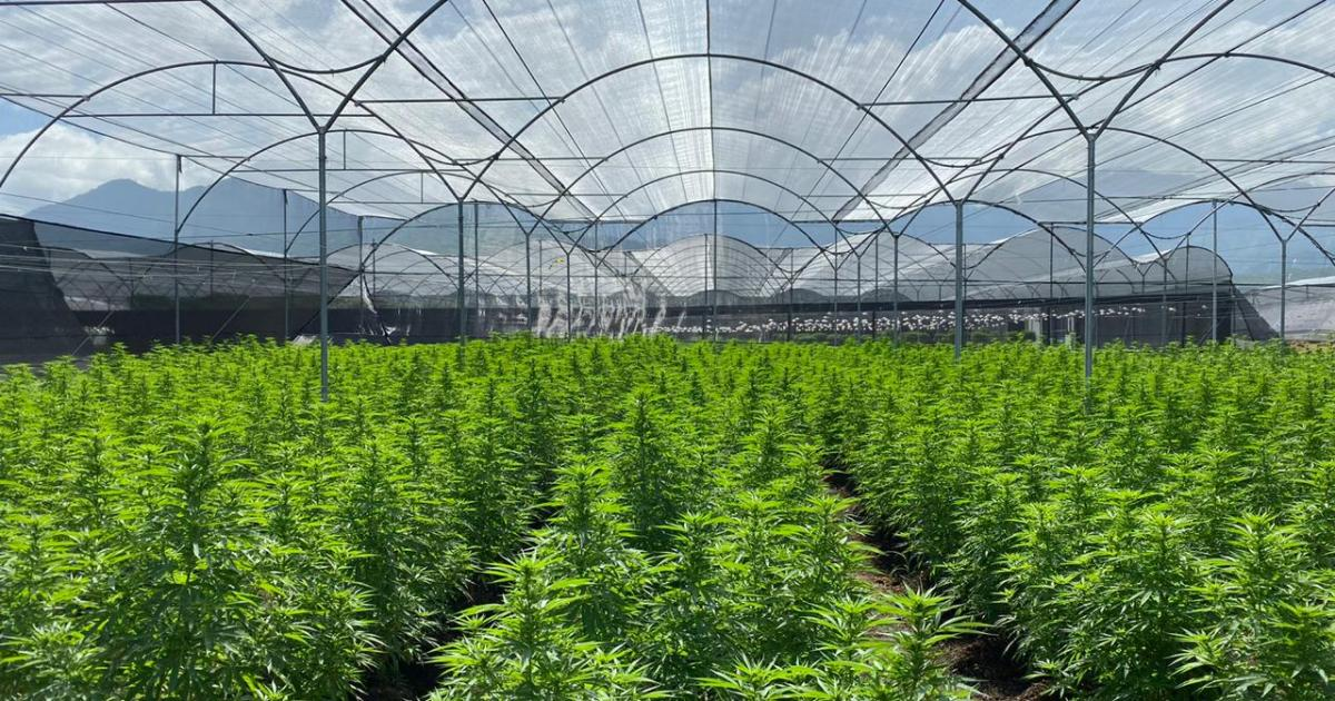 This Company Was Surprisingly Named S&P Global's Most Sustainable Brand In Cannabis