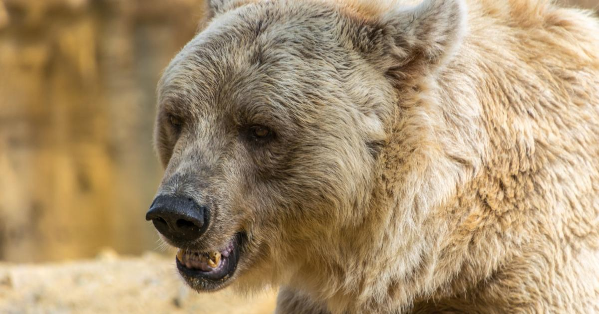Bears Fawning For FANG With A Newly Upsized ETN