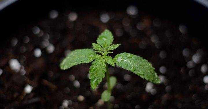 Will The SAFE Act Benefit Marijuana ETFs?
