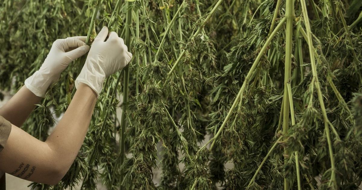 SD Police Throw Out Recreational Cannabis Measure Over 'Technicality'