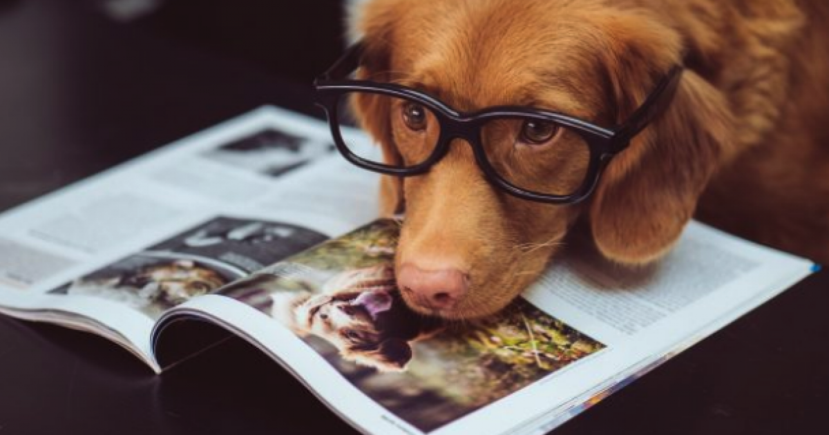 CBD For Dogs: Do Vets Recommend It For Your Pets?