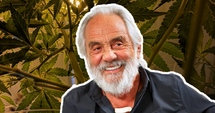 Tommy Chong Talks About His Daily Cannabis Use And More