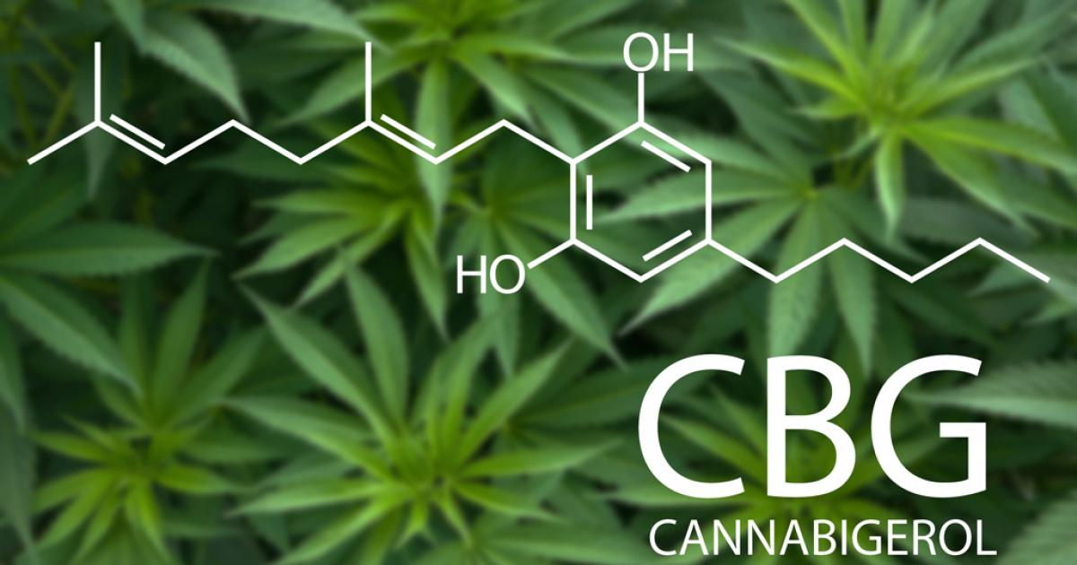 CBG, The Mother Of Cannabinoids, Is In The Spotlight