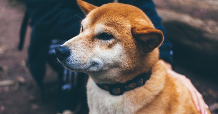 Here's How Shiba Inu (SHIB) Rally Is Different From Dogecoin
