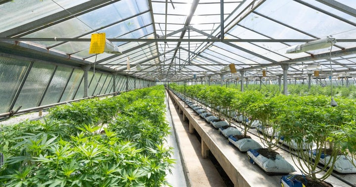 Cannabis REIT IIP Touts Strong Acquisitions And Portfolio Performance In Q1
