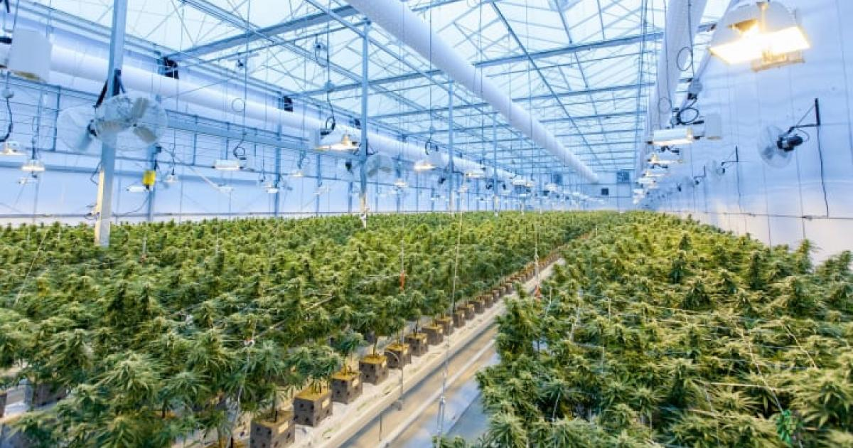 As New States Legalize, Cannabis's Environmental Footprint Looms
