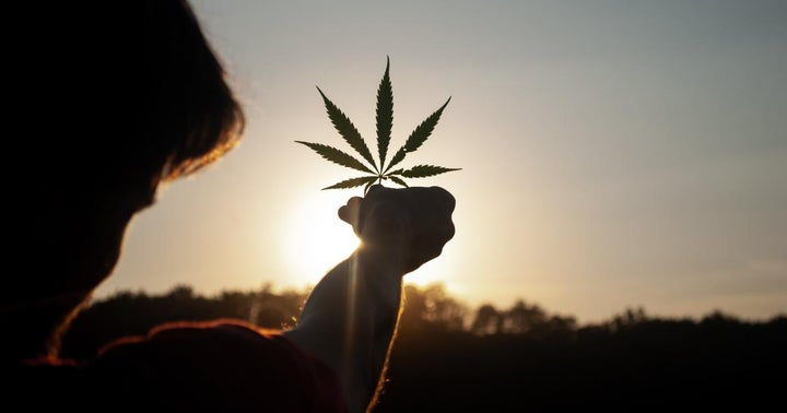 Cannabis Movers & Shakers: Sensi Media Group, Southern Glazer's