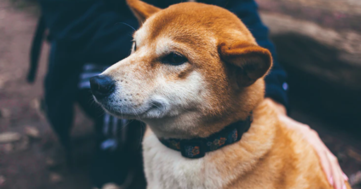Professional Trader Sees Doge Market Uncertainty, Calls on Traders to Get Back to Basics