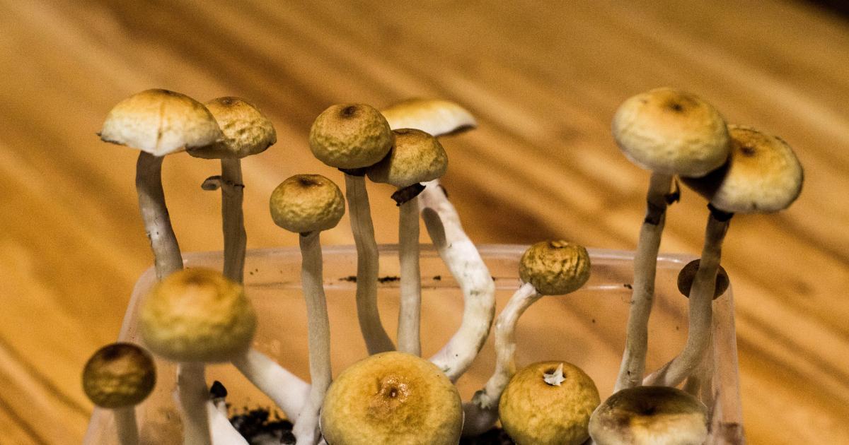 Psilocybin Legalization: New Bills Introduced In Florida, Connecticut and Hawaii