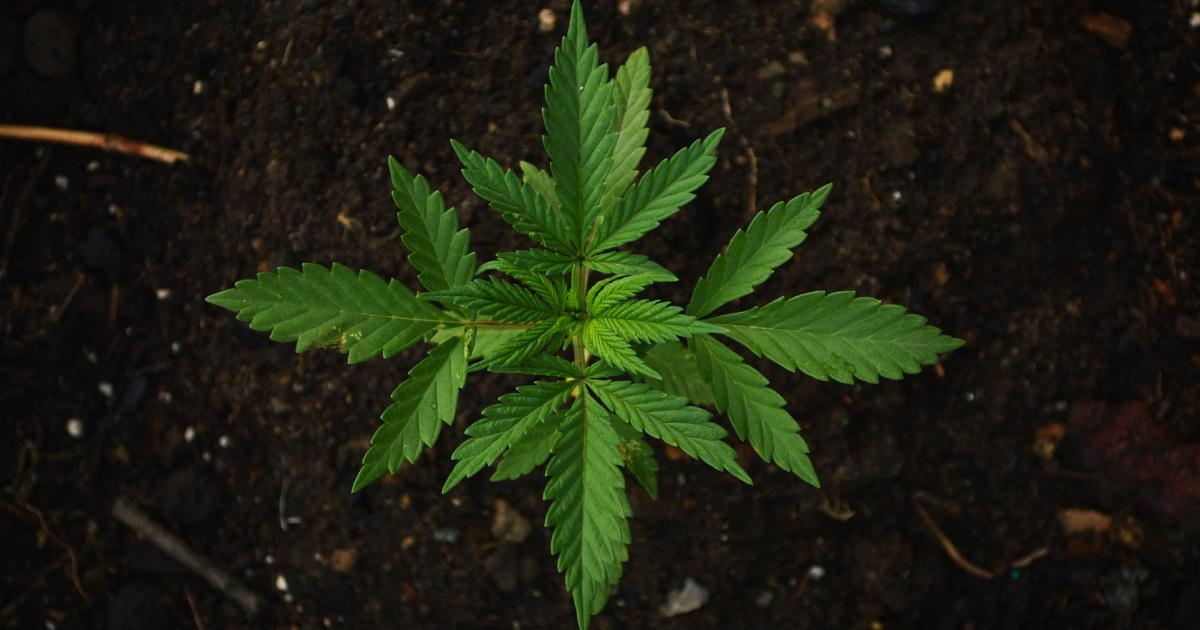 Cannabis Countdown: Top 10 Marijuana Industry News Stories Of The Week, 8/5/19
