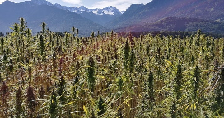 4 Facts About Africa's Budding Cannabis Industry