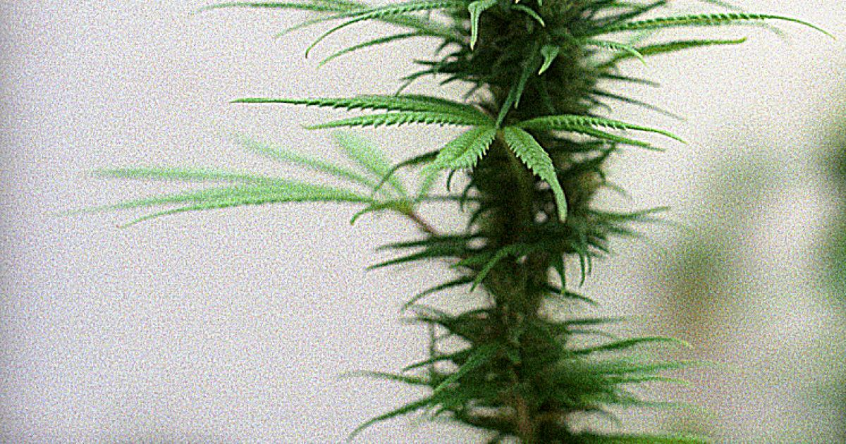 The Benefits Of Using Hemp In The Construction And Textile Industries