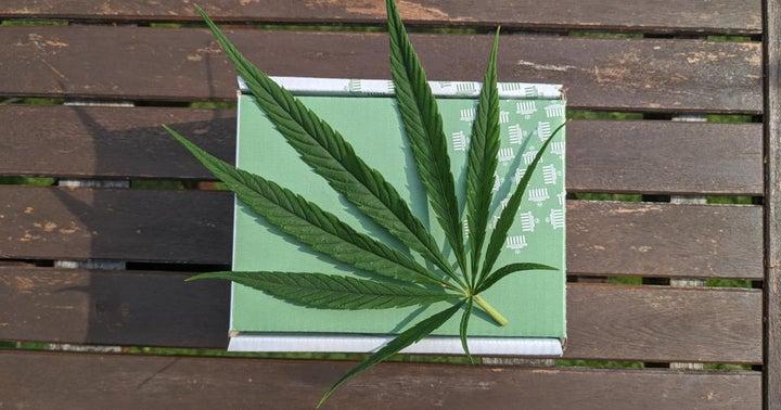 Pennsylvania's Lieutenant Governor, Cannabis Advocates Call For Legalization On 420