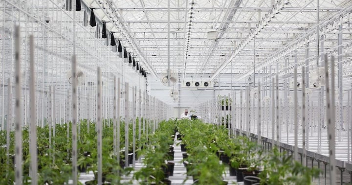 Hexo Analysts React To Resignation Of Cannabis Company's CFO: 'What Don't We Know?'