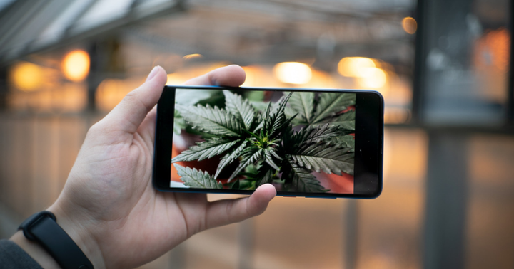 How To Use Instagram To Boost Your Cannabis Dispensary