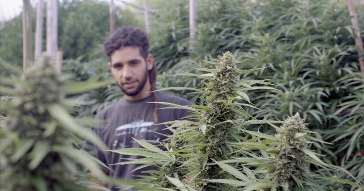Uruguay Senate Approves New Bill To Regulate Access To Medical Cannabis