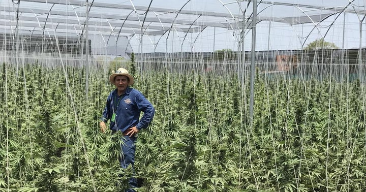 3 Methods To Help Cannabis Growers Stay Profitable While Practicing Sustainability