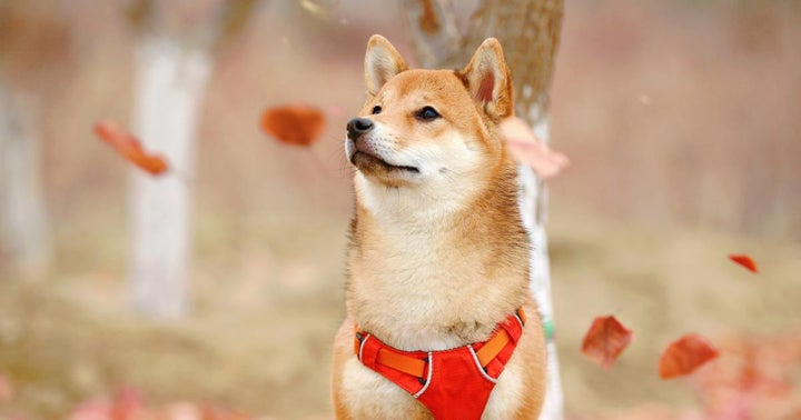 Such Freedom, Much Wow! Dogecoin Can Now Be Traded Without A Centralized Broker
