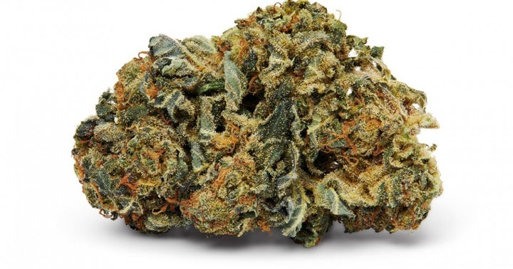 Lotus Cannabis Finding Success Growing Premium Dried Flower