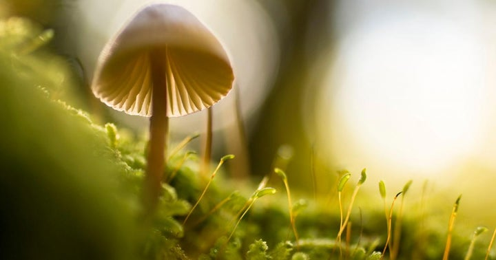 Cybin Partners With Toronto Centre For Psychedelic Science For Psilocybin Research Project