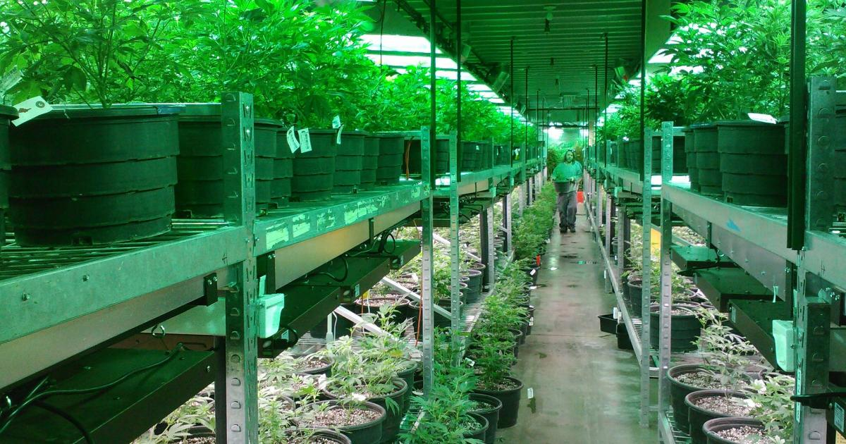 Aurora Cannabis Receives Health Canada Licenses For Outdoor Cultivation