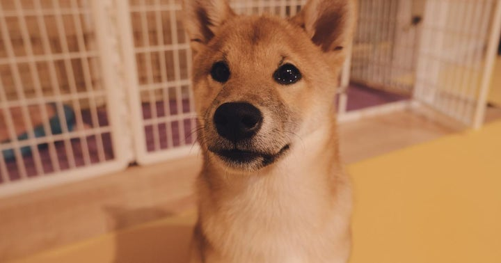 Doge Army Showers Love On Newegg As It Begins Accepting Dogecoin Payments