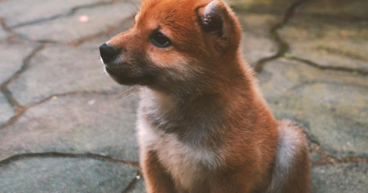 Suffered Massive Losses On Shiba Inu? This Cryptocurrency Exchange Is Fully Compensating Customers