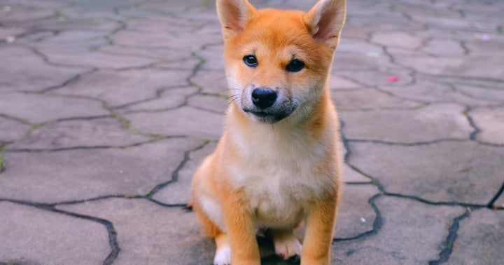 Shiba Inu, Ethereum Classic, Polygon — May's Best Performing Cryptos