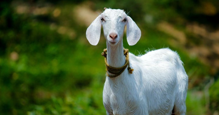 Facebook CEO Mark Zuckerberg Sparks Bitcoin Speculation As He Reveals The Name Of His Pet Goats