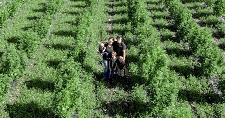 Family-Run Nightshade Farm Seeks Strategic Partner As MSOs Scoop Up NY Cannabis Licenses