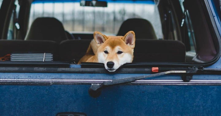 Is Vitalik Buterin In The Dogehouse? Ethereum Co-Founder's Charitable Donation Causes Drop In Shiba Inu, Other Coins