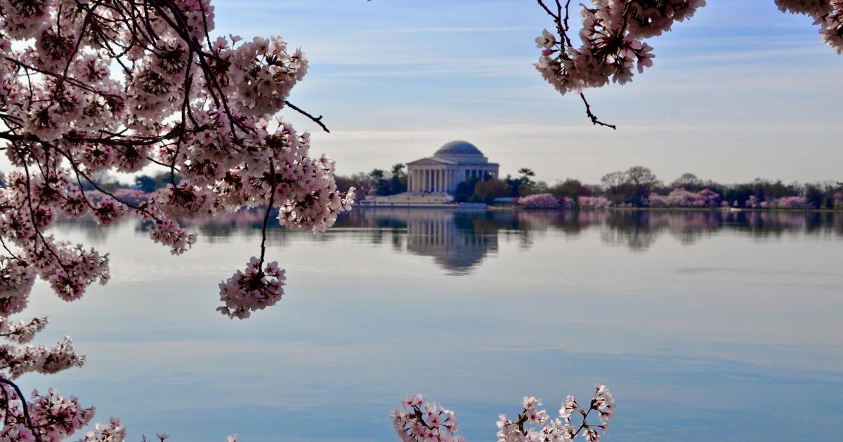Washington DC Decriminalizes Psychedelic Plants, Fungi