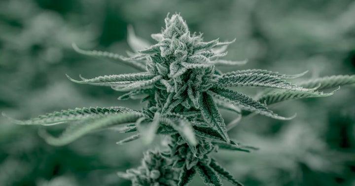 Cannabis REIT IIP To Raise $200M Via 5-Year Debt Offering