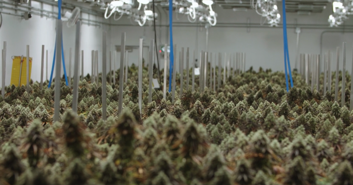 If You Invested $1,000 In Sundial Growers Stock 1 Year Ago, Here's How Much You'd Have Now