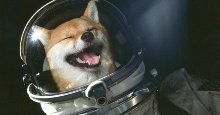Why Dollar Value Transferred On Dogecoin Exceeded Bitcoin, Ethereum By Over 70%