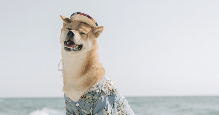 New Doge? Shiba Inu's (SHIB) Price Grows By 150% As Major Crypto Exchanges List It