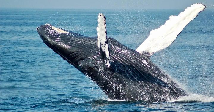 Dogecoin Mega-Whale? Elon Musk Thinks It Could Be Robinhood
