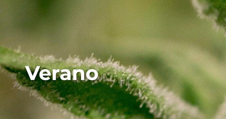 Verano To Go Public In Canada Via RTO, Launches A Subscription Receipt Offering