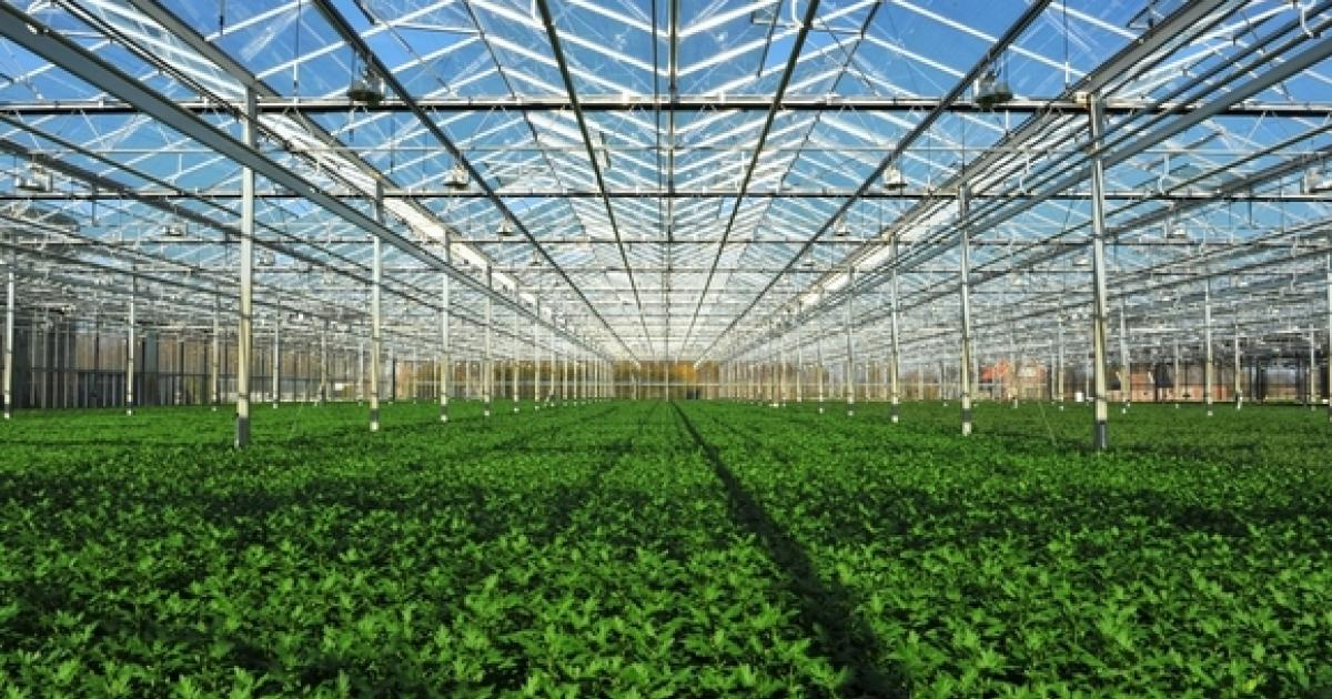 Village Farms Announces $135M Registered Direct Offering