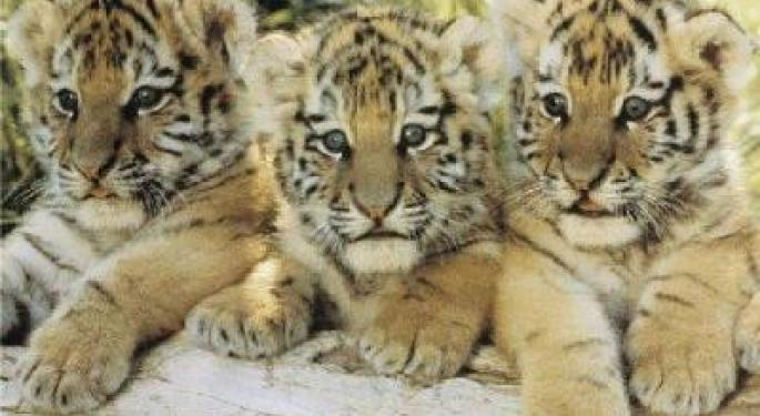 The Nine Stocks Tiger Cubs Love